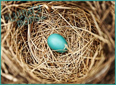 Nest, Family, Home, Food, Life, Life Stories, Raising Children, Baby Birds, Empty Nest, life stories, New Baby