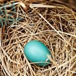 The Nest…