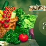 Grow a Salad