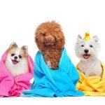 Healthy Options for Your Pet